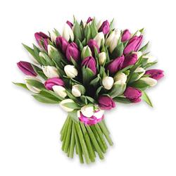 Белые и лиловые тюльпаны