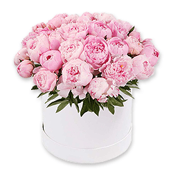 Peonies in box