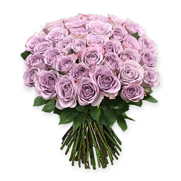 Lilac roses