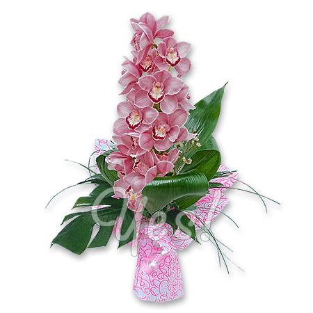 Орхидея в Киеве