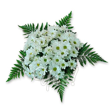 Букет из белых, ромашковых хризантем