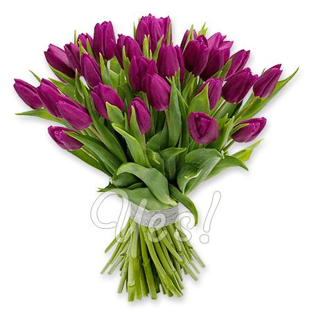 Букет из фиолетовых тюльпанов в Вене