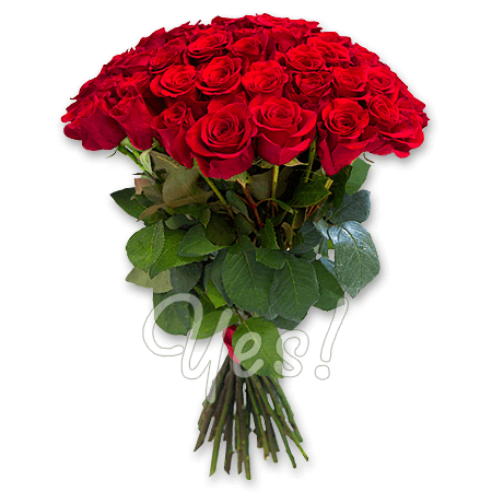 Bouquet of red roses (60 cm.)